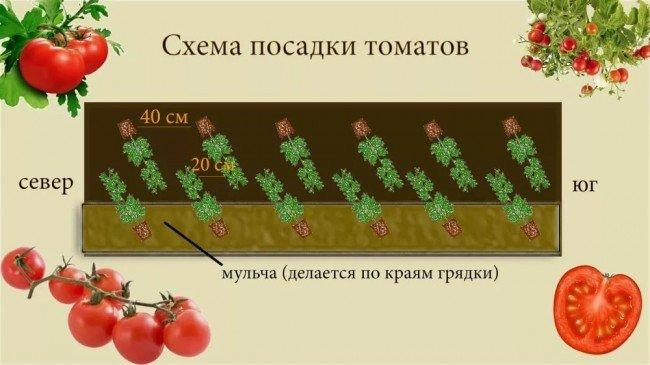 схема посадки помидор