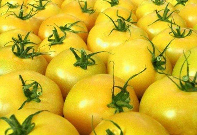 помидор - золотое яблоко