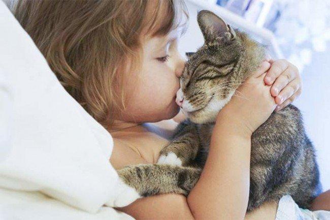 кошка и здоровье