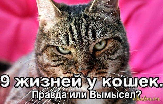 У кошек 9 жизней? Правда ли это?
