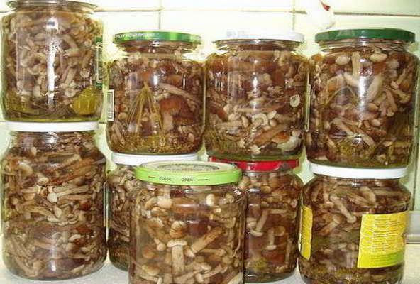 заготовки на зиму из грибов