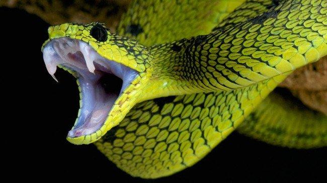 Почему кусает змея?