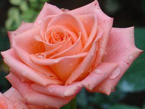 Что означает когда мужчина на Тайване дарит 14 февраля 100 роз