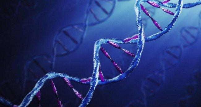 генетическая экспертиза