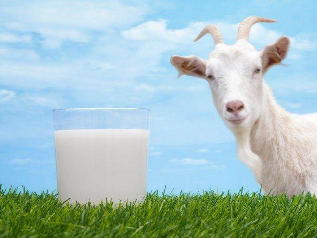 """""""Как с козла молока"""" - значение и происхождение фразеологизма с примерами?"""