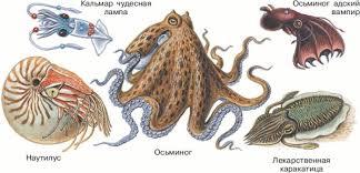 каких моллюсков вы знаете - викторина