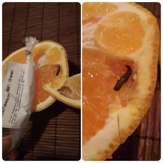 черви в апельсинах