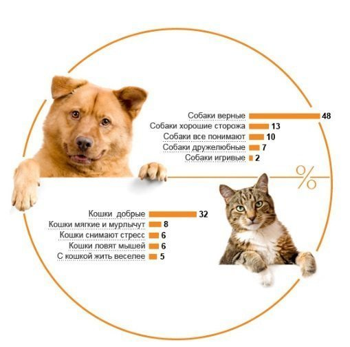 плюсы кошек и собак