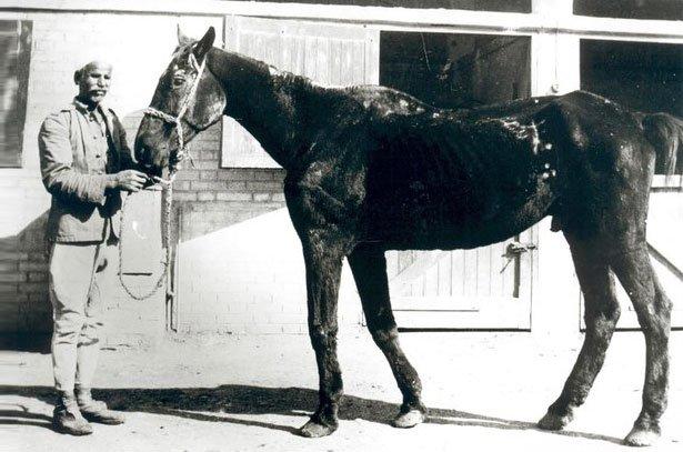 Самый старый конь
