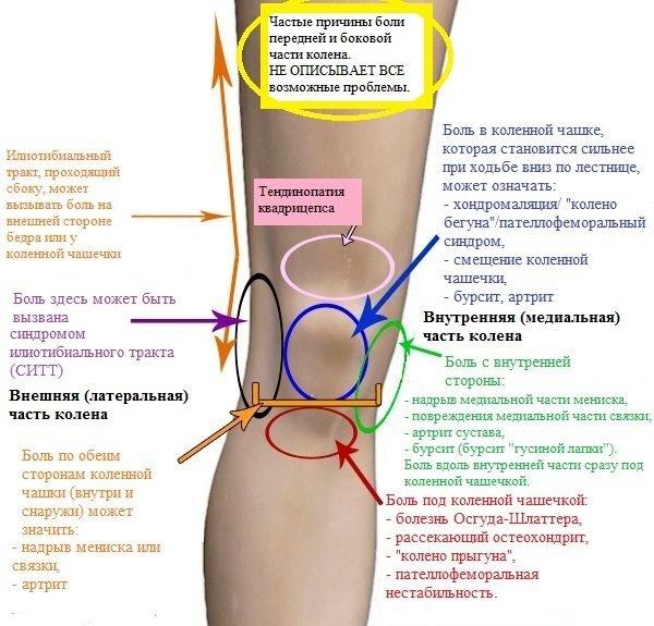 строение ноги и причины болей