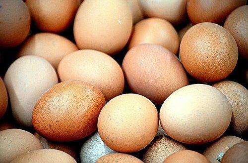 Производство яиц.