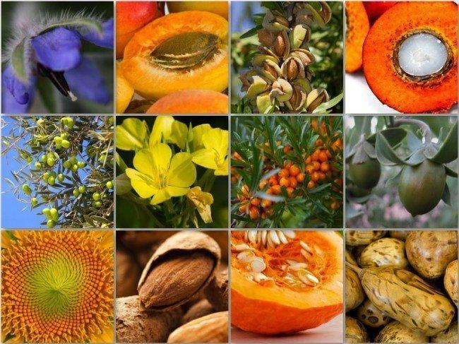 продукты из которых получают растительные масла