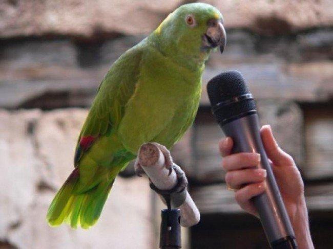 болтливый попугай