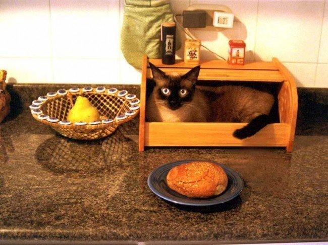 Как отучить кошку ходить по столам