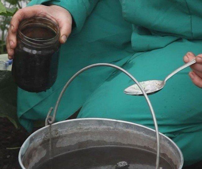 Как поливать помидоры йодом и марганцовкой