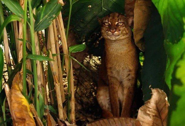кошка в тропиках