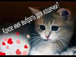 Как выбрать имя для кота или кошки?