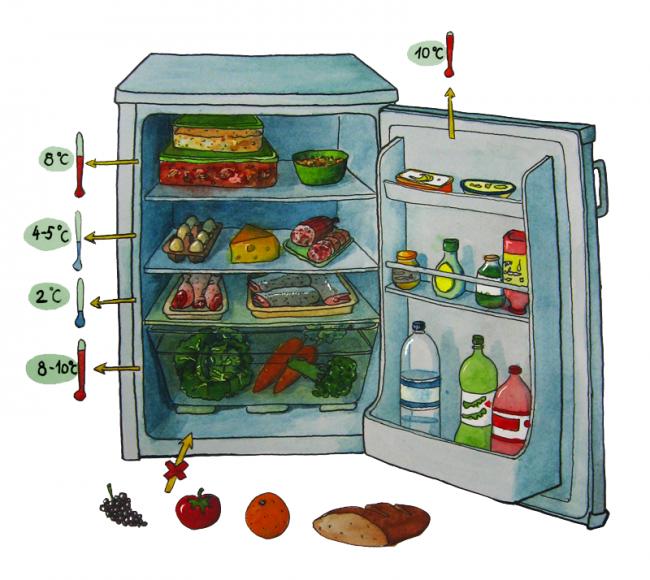 холодильник и правила хранения продуктов