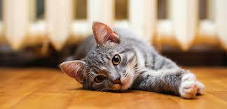 Кошка и отдых ее хозяев