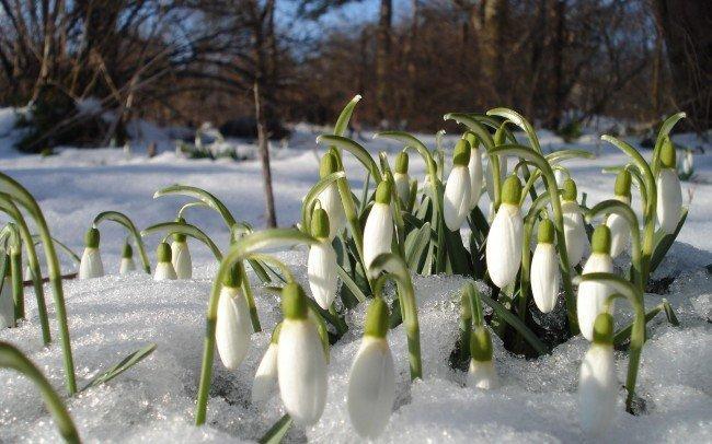 С какой скоростью движется весна?