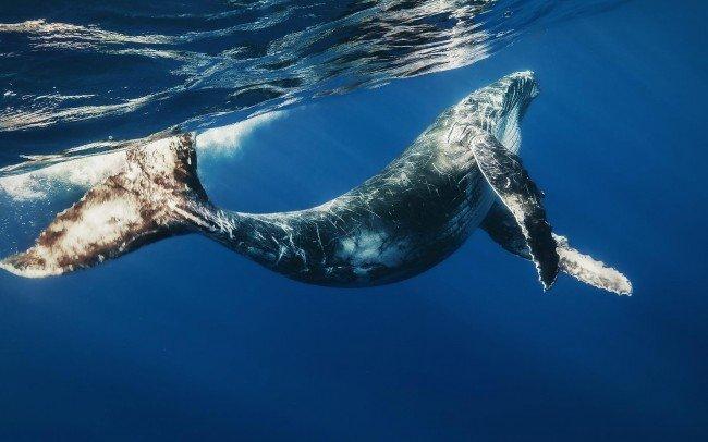 Сколько лет живут киты?