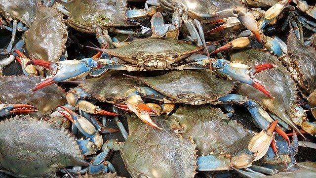 Морепродукты: польза и вред