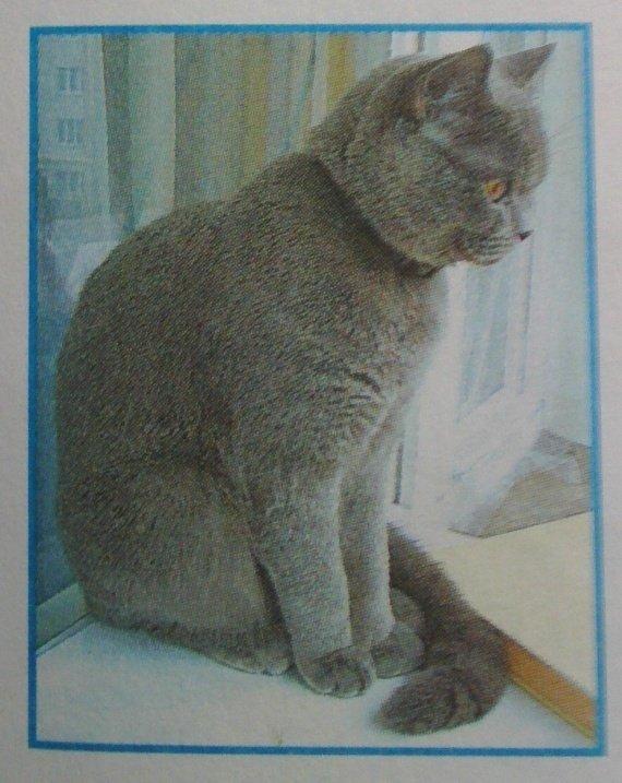 Как определить породу кошки на фотографии?