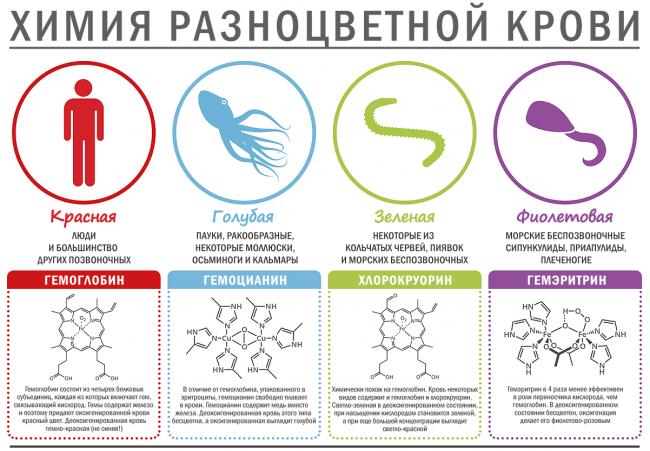 Таблица по цвету крови