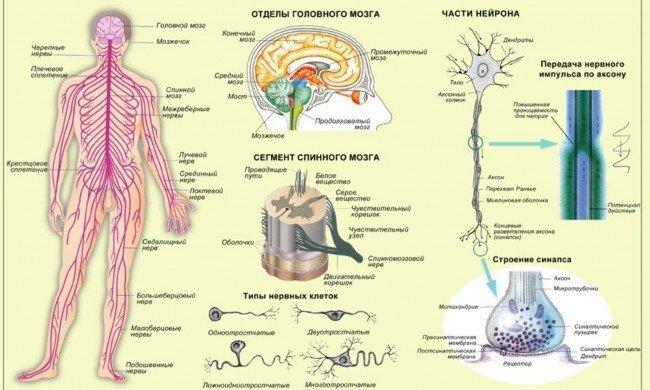 виды неврозов, причины нервных заболеваний