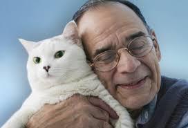 кошка рядом с хозяином