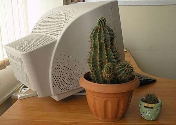 Польза кактуса возле компьютера