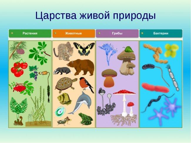 Примеры представителей царств живой природы по окружающему миру