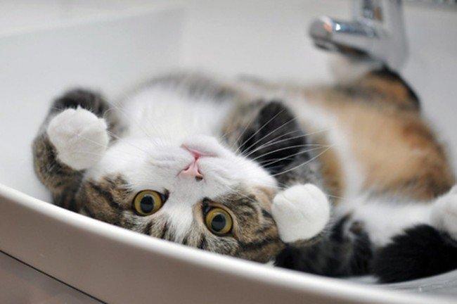 кошки - ласковые животные