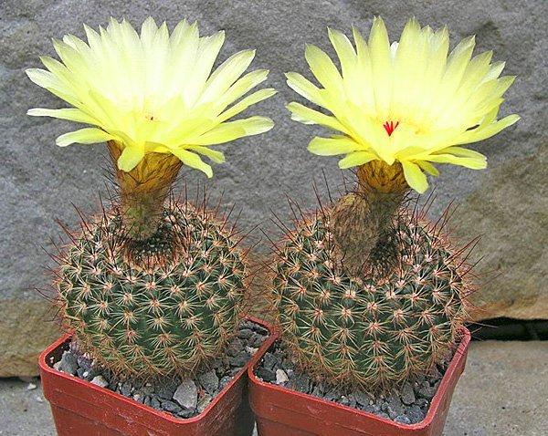 Какие растения и цветы полезно держать в квартире?