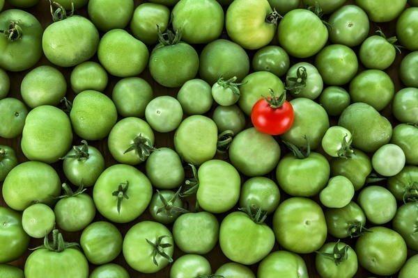 как заставить покраснеть помидоры