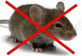 мышь - опасно!