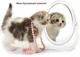 кошка и кличка