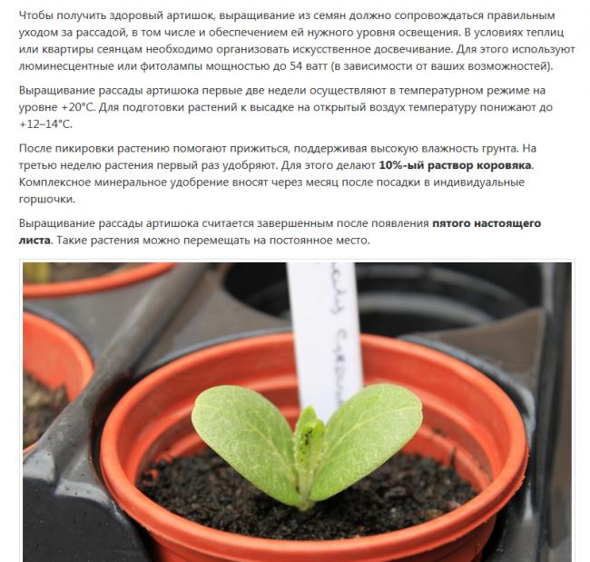 правила выращивания