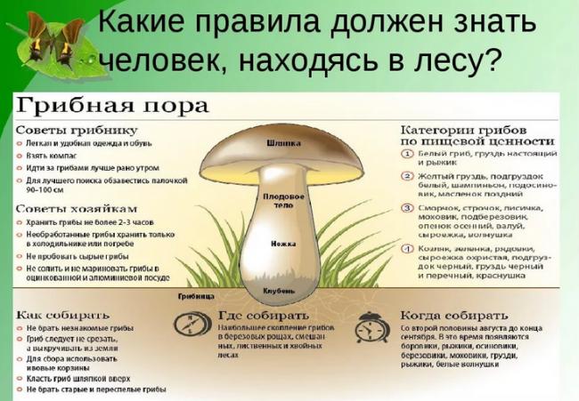 лесные правила