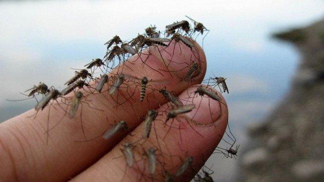 Почему комары кусают не всех людей, а выборочно?
