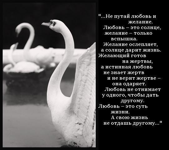 любовь и желание