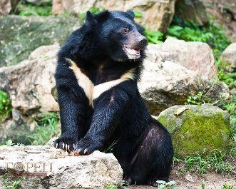 Какие виды медведей существует в природе?