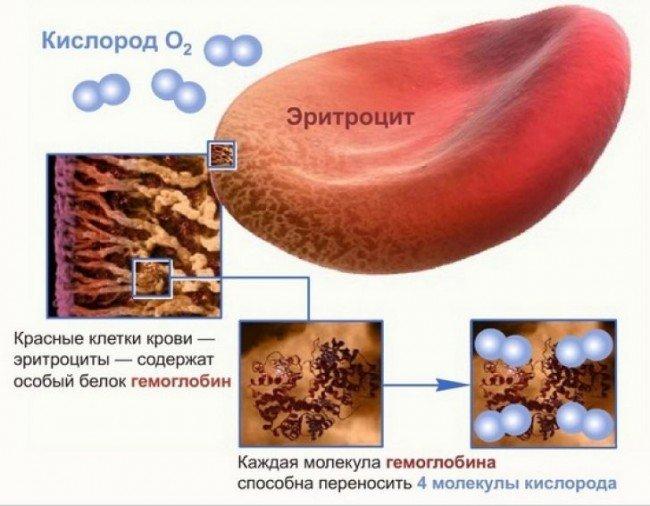 Врач который лечит гемоглобин как называется