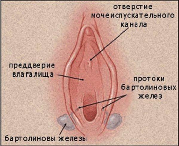 vlagalishe-klitor-chlen-seks
