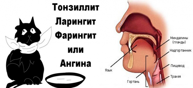 Что то в горле мешает и вызывает кашель как лечить