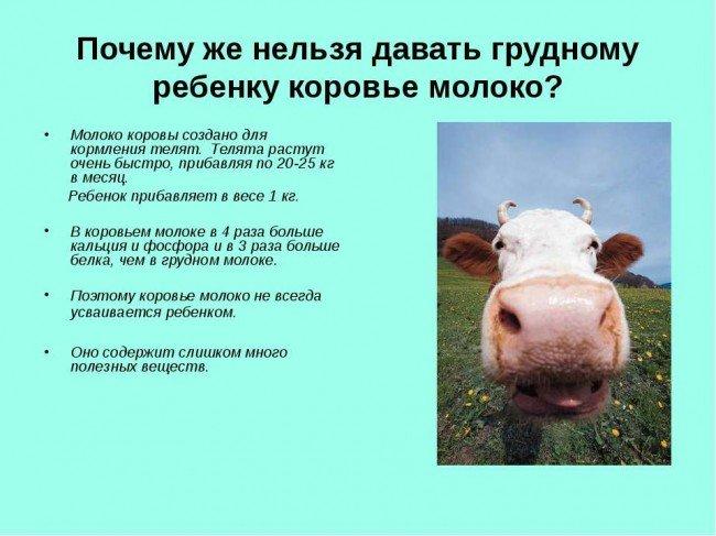 причины по которым нельзя давать коровье молоко детям