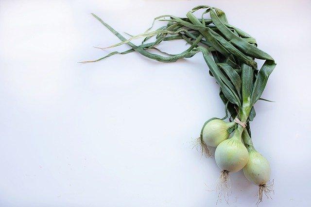 Чем обработать лук от червей в луковице?