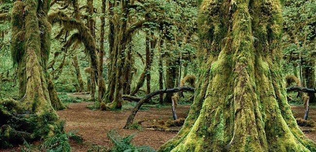 Самшит - семейство кустарников и деревьев