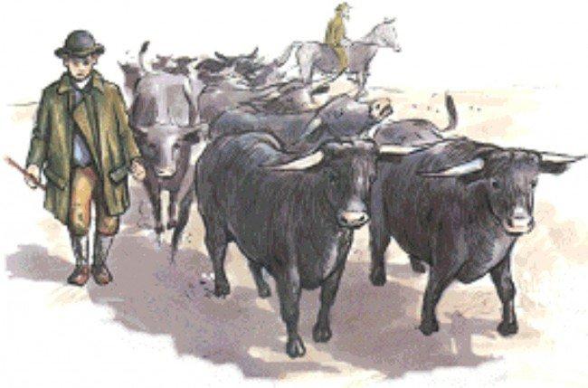 Скот, гонимый погонщиками