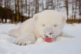 Мишка радуется снегу.